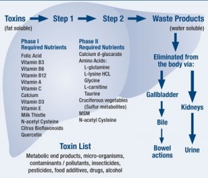 Detox pathway, organs and nutrients needed